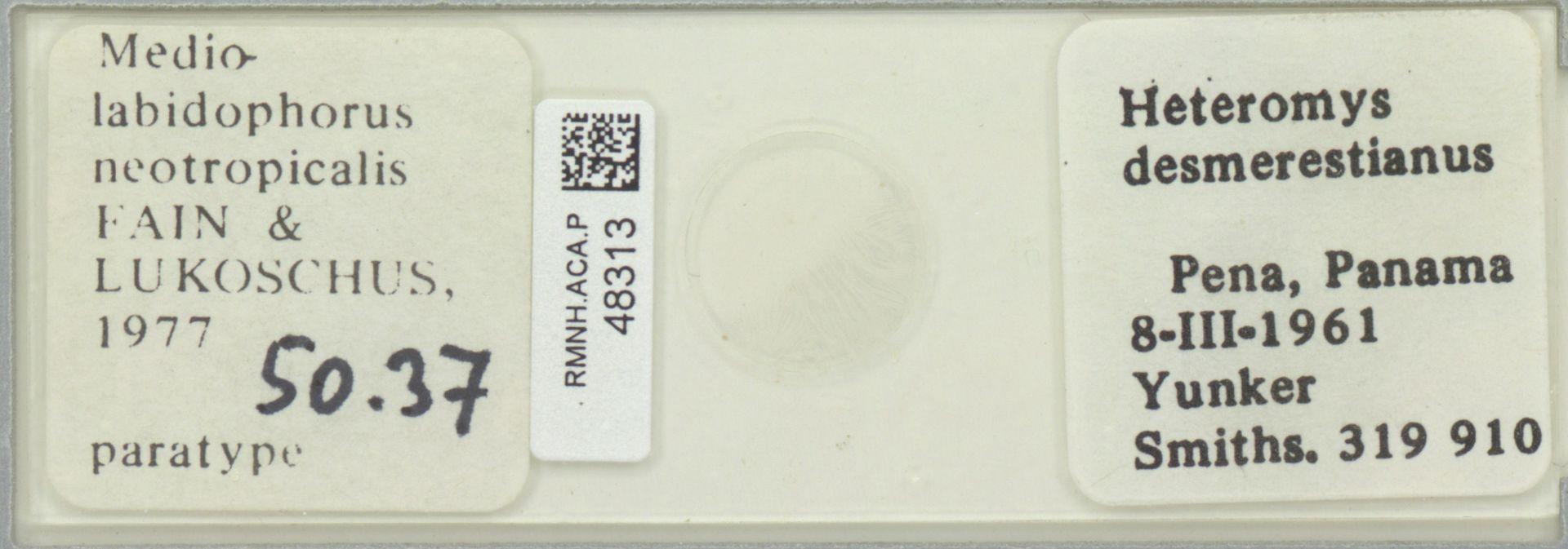 RMNH.ACA.P.48313 | Mediolabidophorus neotropicalis Fain & Lukoschus 1977