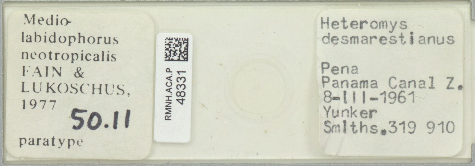 RMNH.ACA.P.48331 | Mediolabidophorus neotropicalis Fain & Lukoschus 1977