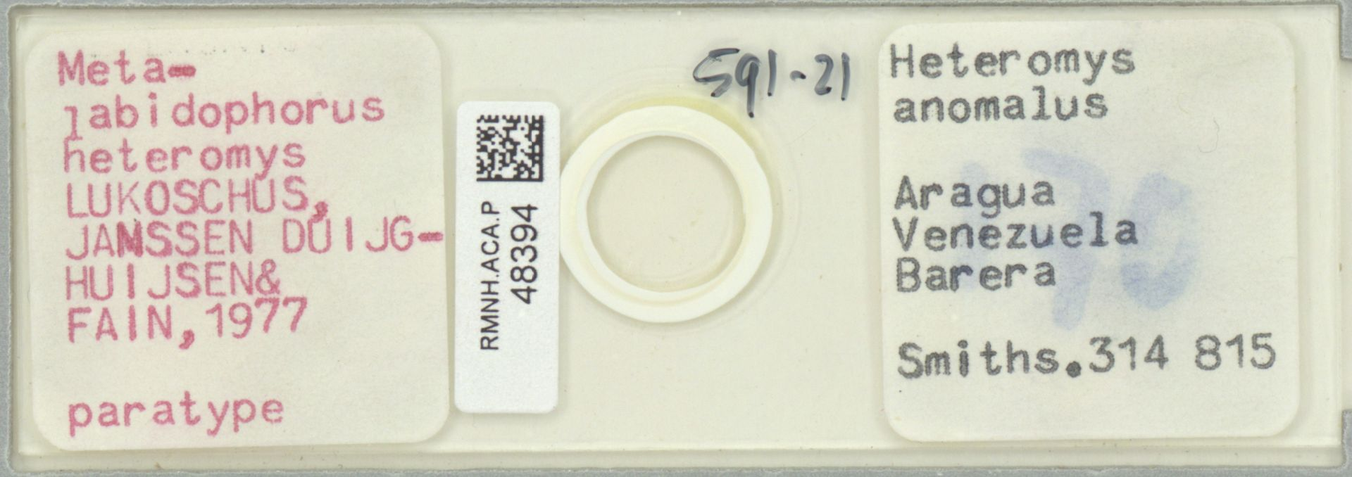 RMNH.ACA.P.48394 | Metalabidophorus heteromys Lukoschus, Janssen Duijghuisen & Fain, 1977
