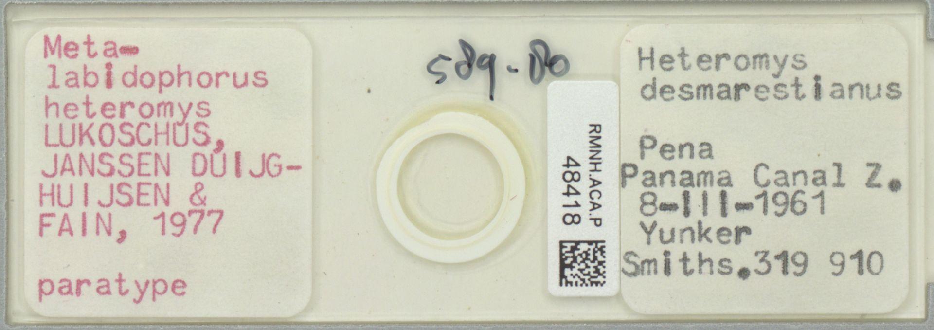 RMNH.ACA.P.48418 | Metalabidophorus heteromys LUKOSCHUS, JANSSEN DUIJGHUIJSEN & FAIN, 1977
