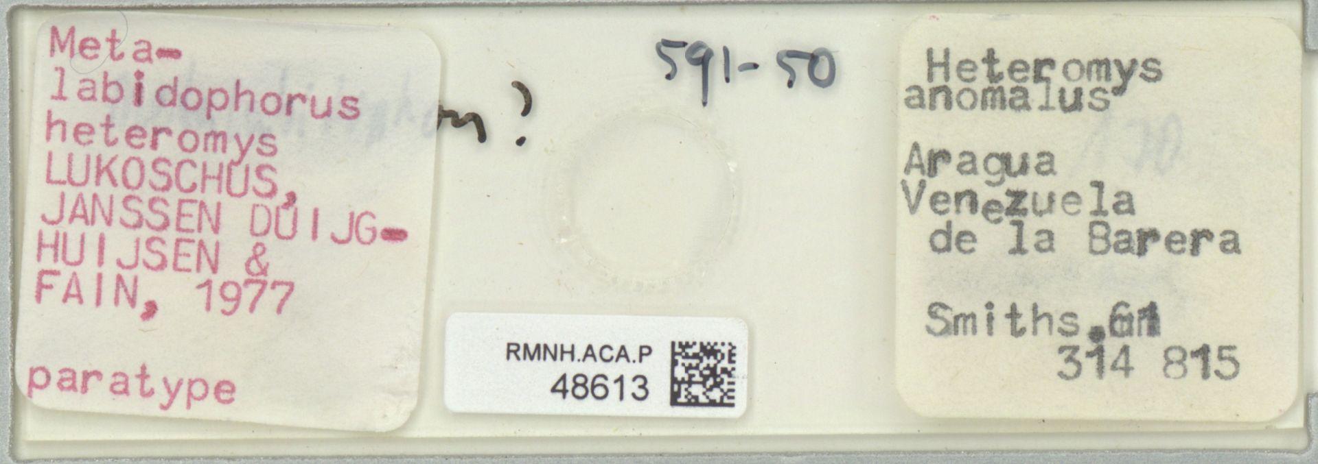 RMNH.ACA.P.48613 | Metalabidophorus heteromys Lukoschus, Janssen Duijghuijsen & Fain, 1977