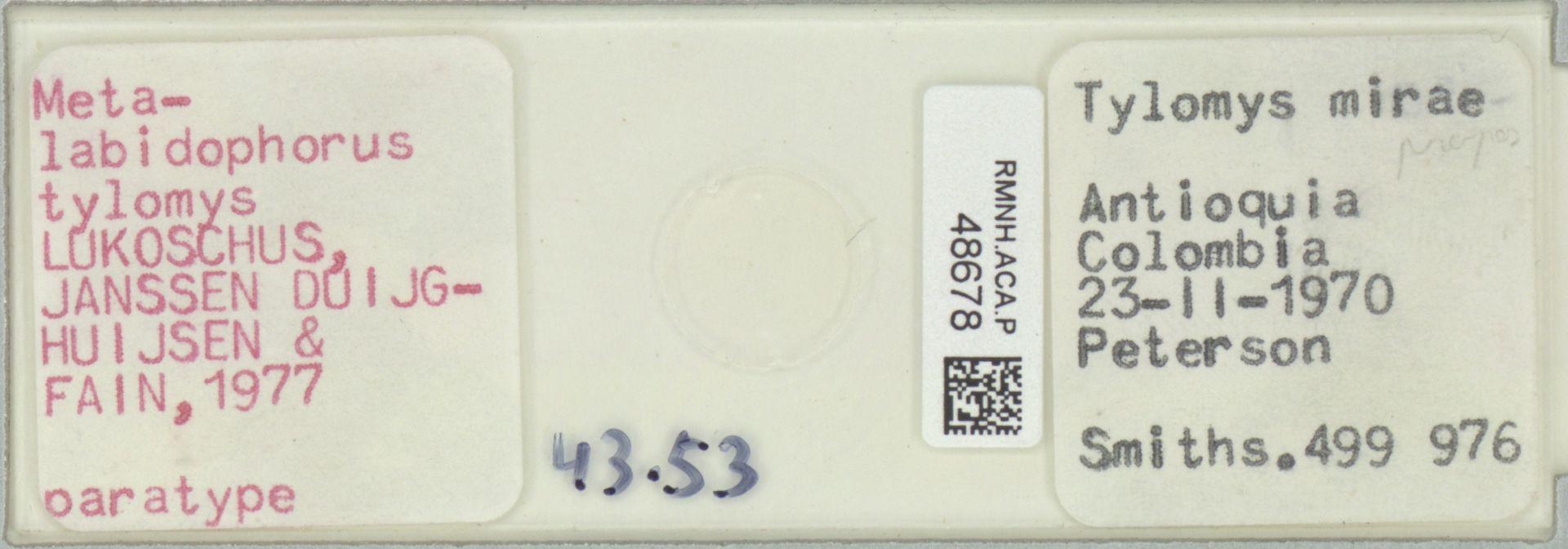 RMNH.ACA.P.48678 | Metalabidophorus tylomys Lukoschus, Janssen Duijghuijsen & Fain, 1977