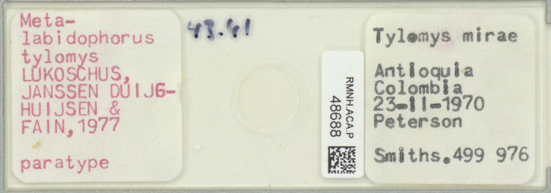 RMNH.ACA.P.48688 | Metalabidophorus tylomys Lukoschus, Janssen Duijghuijsen & Fain, 1977