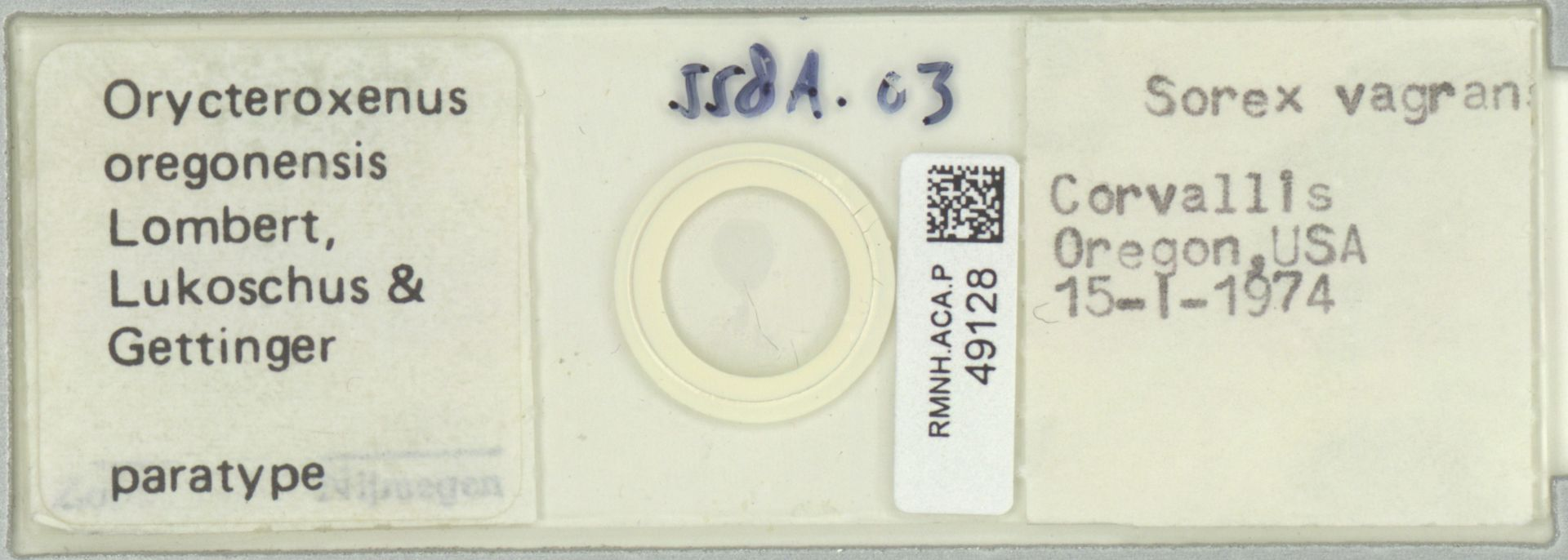 RMNH.ACA.P.49128   Orycteroxenus oregonensis Lombert, Lukoschus & Gettinger