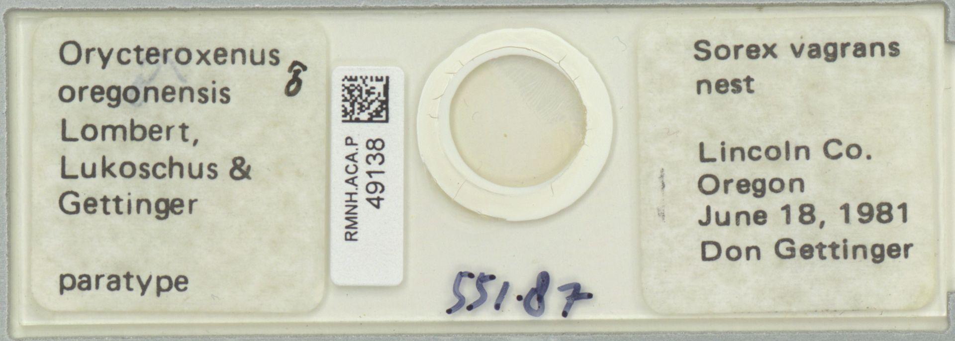 RMNH.ACA.P.49138 | Orycteroxenus oregonensis Lombert, Lukoschus & Gettinger