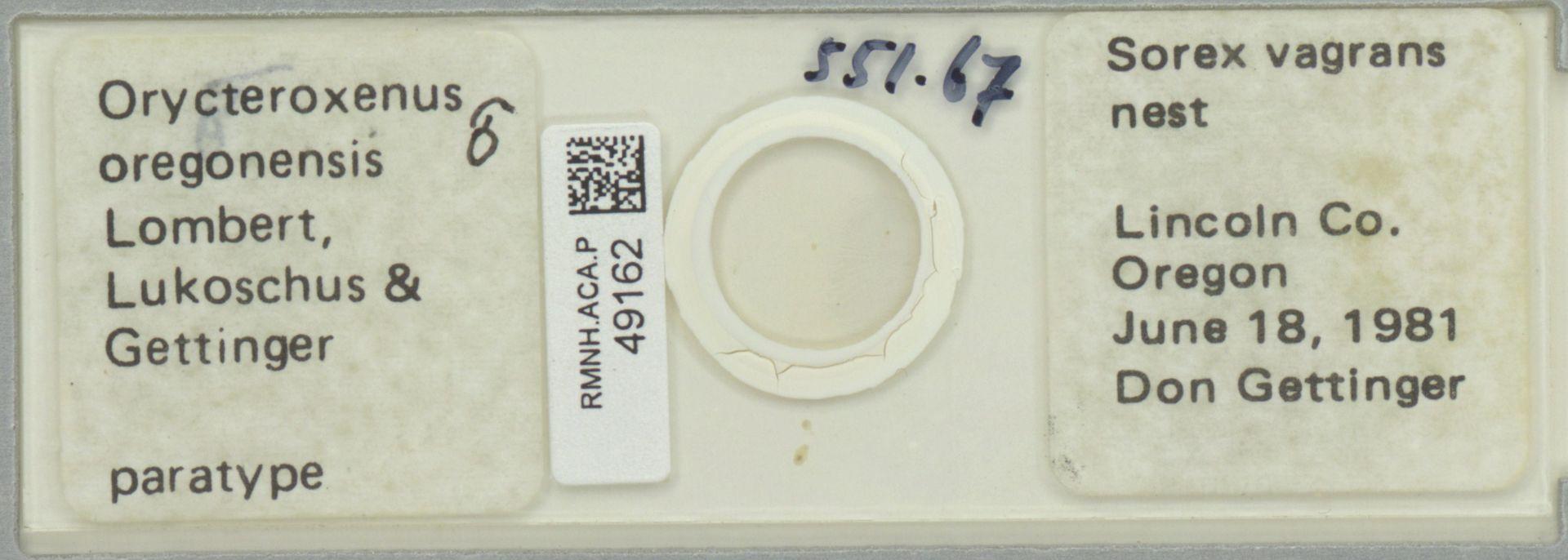 RMNH.ACA.P.49162   Orycteroxenus oregonensis Lombert, Lukoschus & Gettinger