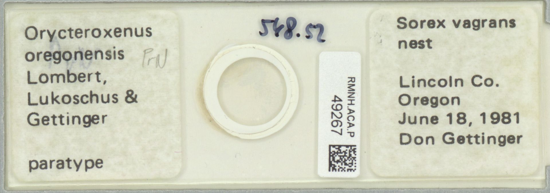 RMNH.ACA.P.49267 | Orycteroxenus oregonensis Lombert, Lukoschus & Gettinger