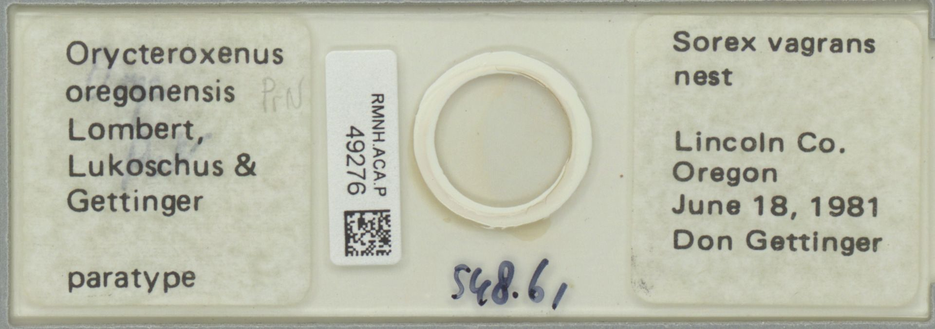 RMNH.ACA.P.49276 | Orycteroxenus oregonensis Lombert, Lukoschus & Gettinger