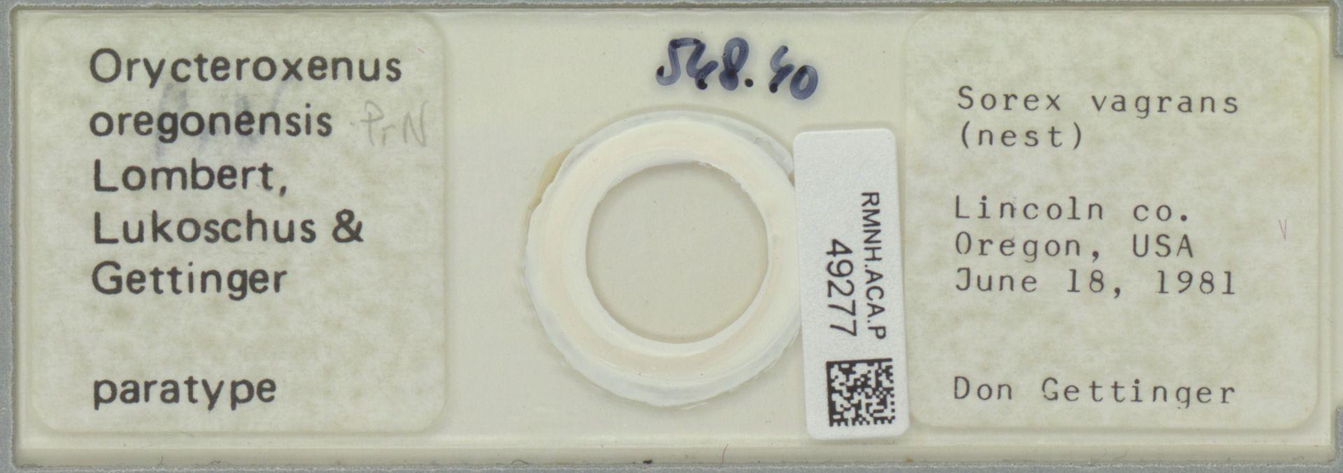 RMNH.ACA.P.49277 | Orycteroxenus oregonensis Lombert, Lukoschus & Gettinger