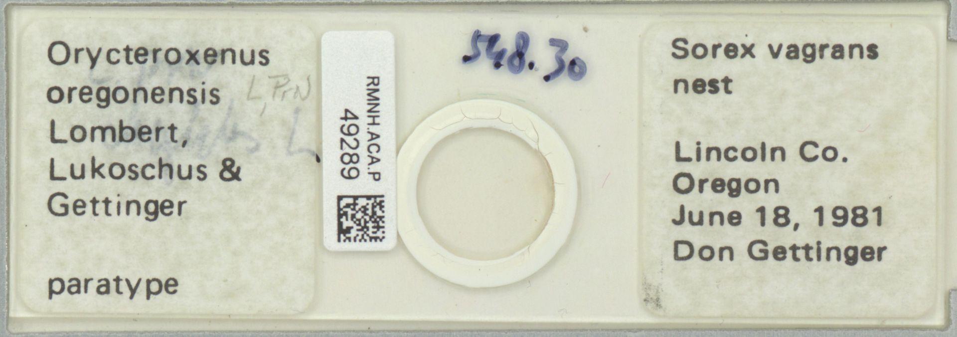 RMNH.ACA.P.49289 | Orycteroxenus oregonensis Lombert, Lukoschus & Gettinger