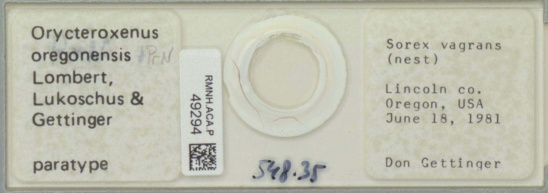 RMNH.ACA.P.49294 | Orycteroxenus oregonensis Lombert, Lukoschus & Gettinger