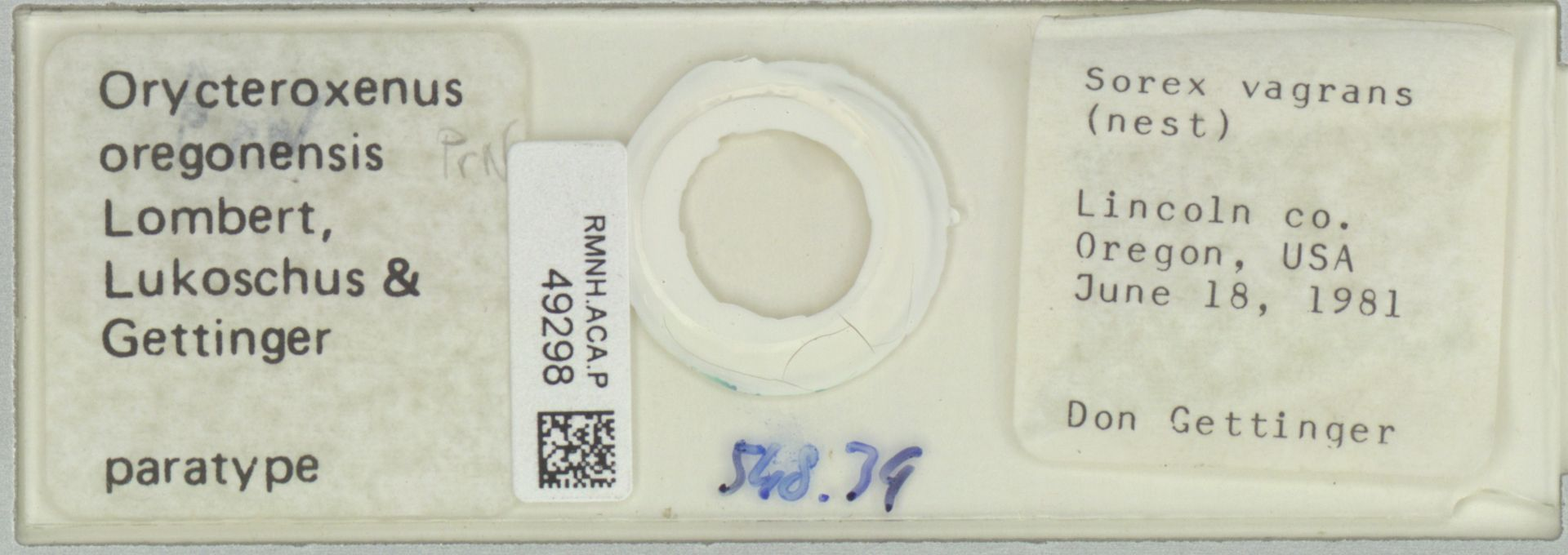 RMNH.ACA.P.49298   Orycteroxenus oregonensis Lombert, Lukoschus & Gettinger