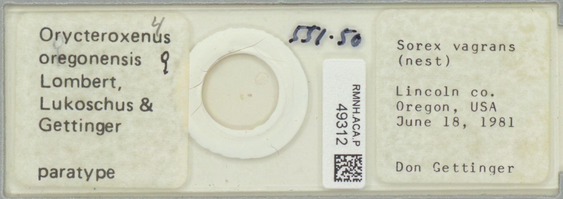 RMNH.ACA.P.49312 | Orycteroxenus oregonensis Lombert, Lukoschus & Gettinger