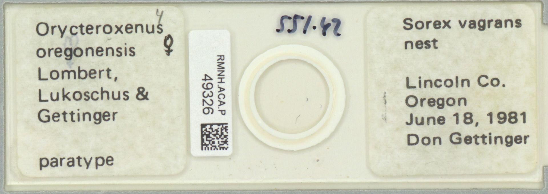 RMNH.ACA.P.49326   Orycteroxenus oregonensis Lombert, Lukoschus & Gettinger