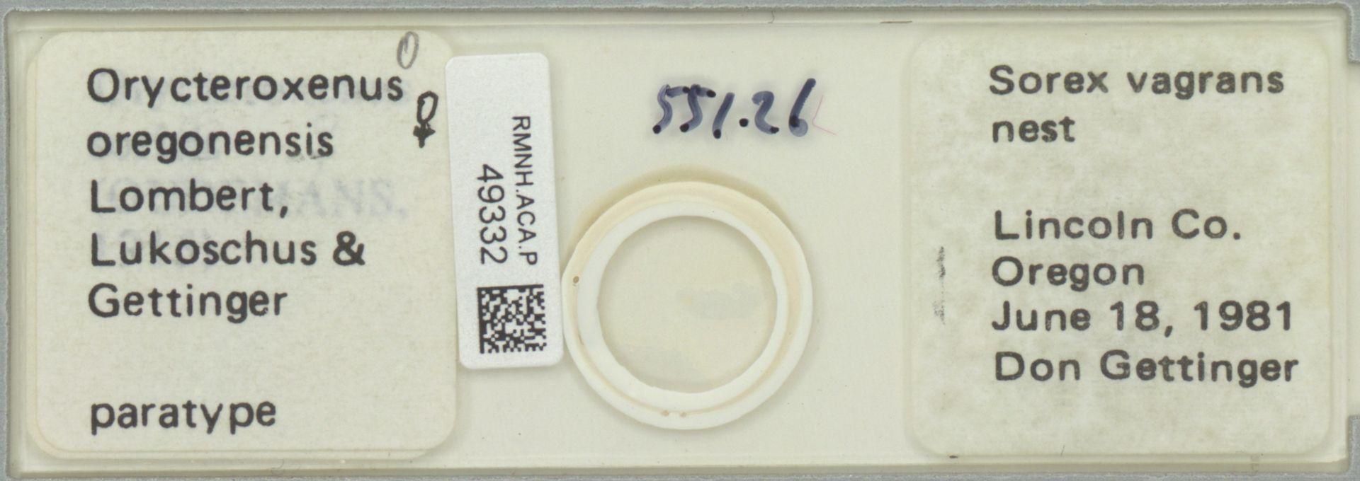 RMNH.ACA.P.49332 | Orycteroxenus oregonensis Lombert, Lukoschus & Gettinger