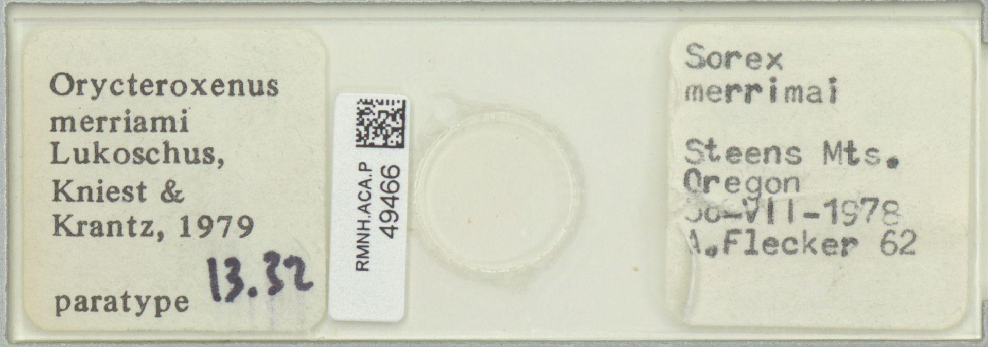RMNH.ACA.P.49466 | Orycteroxenus merriami Lukoschus, Kniest & Krantz, 1979