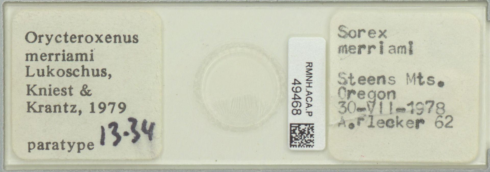RMNH.ACA.P.49468 | Orycteroxenus merriami Lukoschus, Kniest & Krantz, 1979