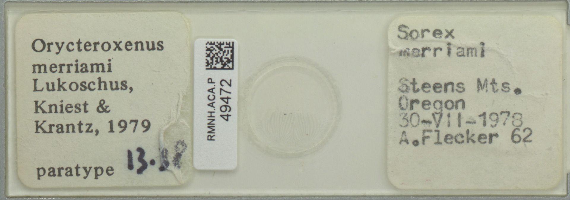 RMNH.ACA.P.49472 | Orycteroxenus merriami Lukoschus, Kniest & Krantz, 1979