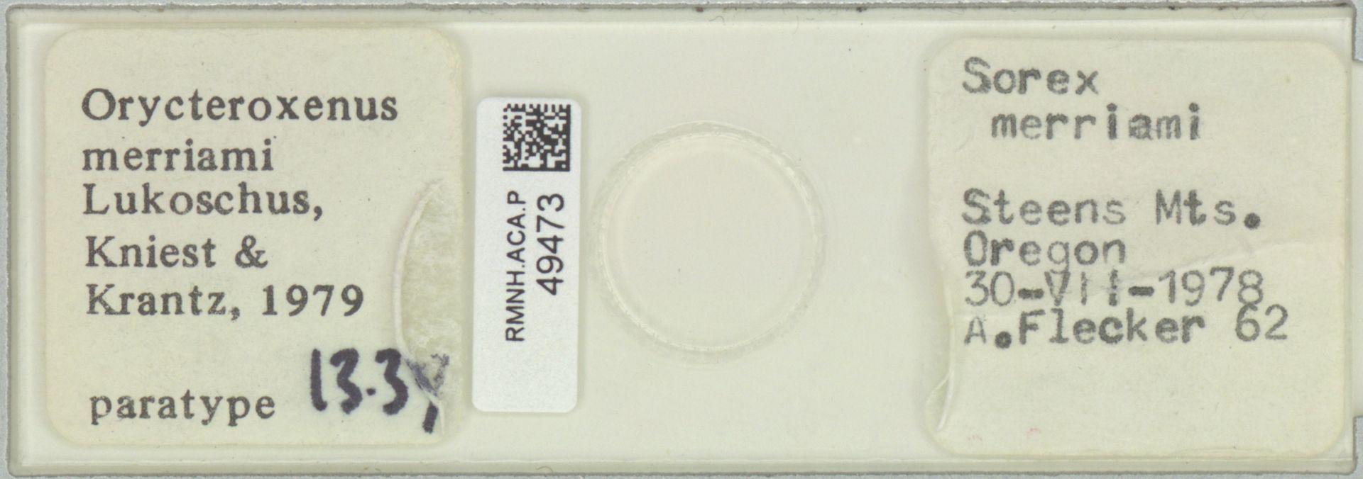RMNH.ACA.P.49473 | Orycteroxenus merriami Lukoschus, Kniest & Krantz, 1979