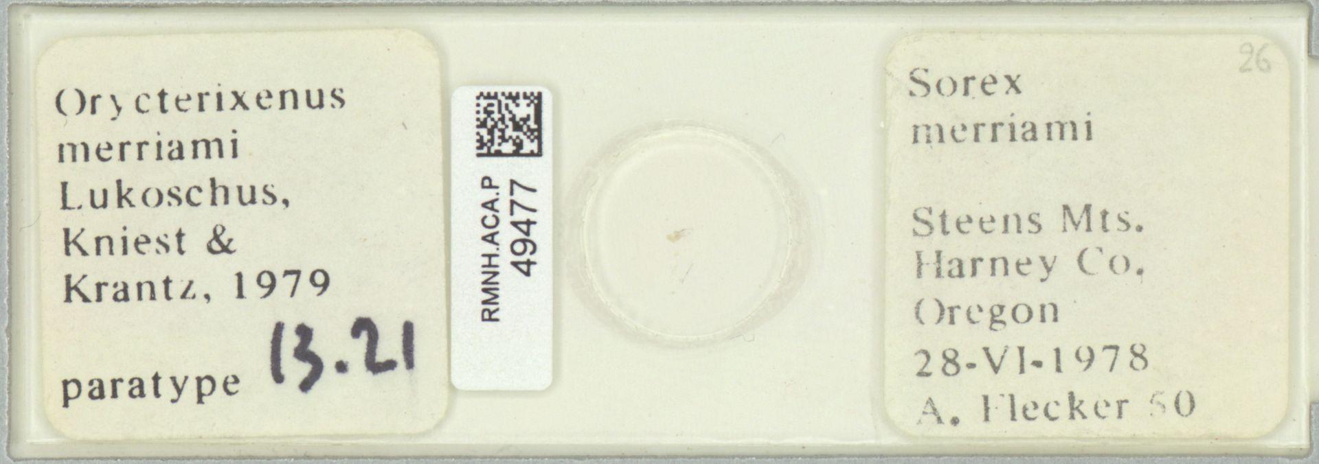 RMNH.ACA.P.49477 | Orycterixenus merriami Lukoschus, Kniest & Krantz, 1979