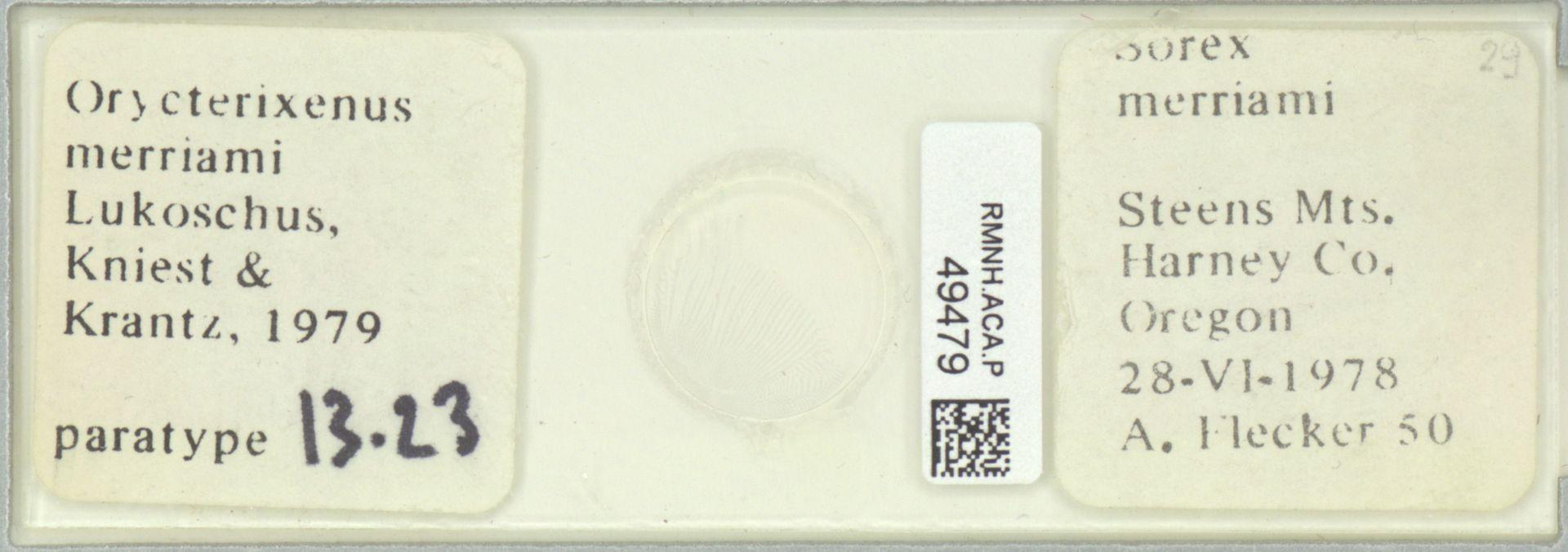 RMNH.ACA.P.49479 | Orycterixenus merriami Lukoschus, Kniest & Krantz, 1979