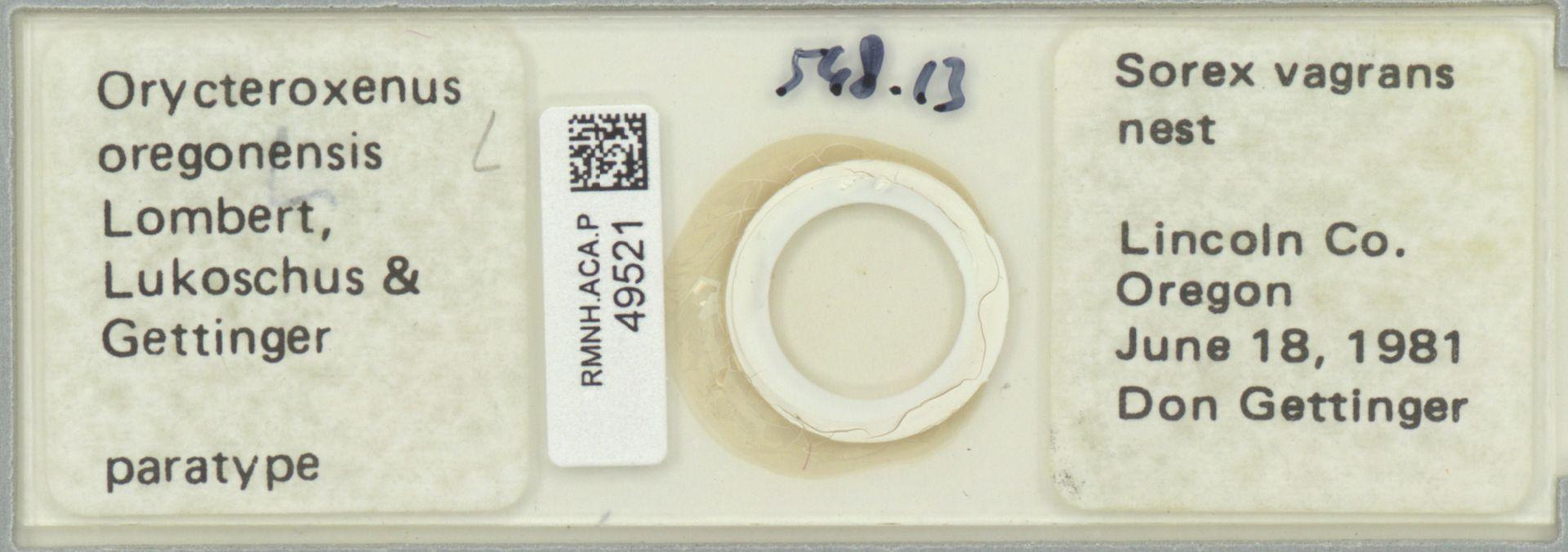 RMNH.ACA.P.49521 | Orycteroxenus oregonensis Lombert,Lukoschus & Gettinger