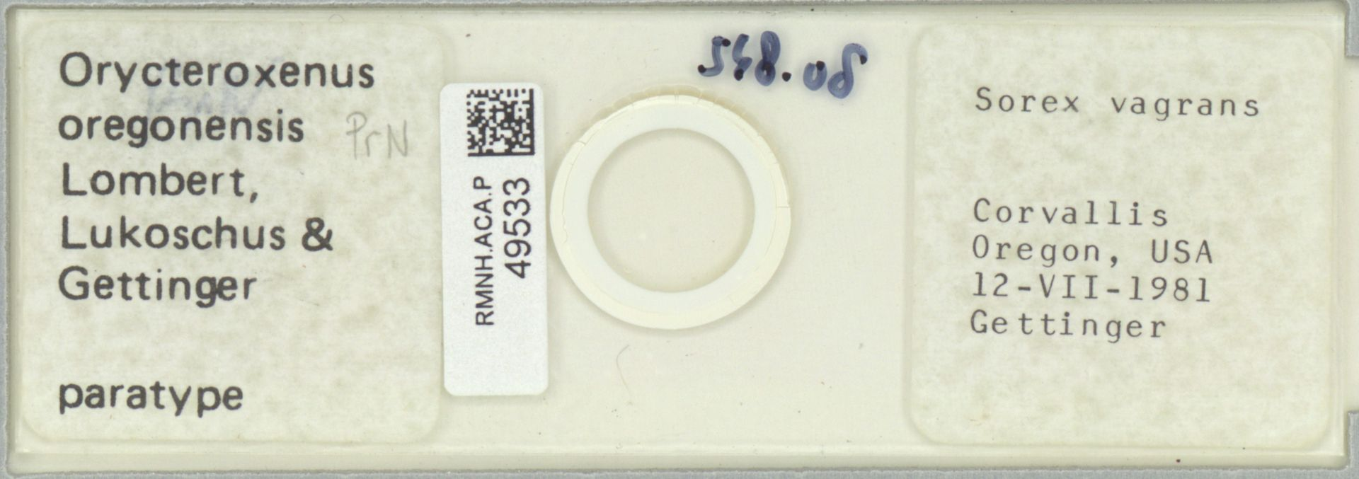 RMNH.ACA.P.49533 | Orycteroxenus oregonensis Lombert, Lukoschus & Gettinger