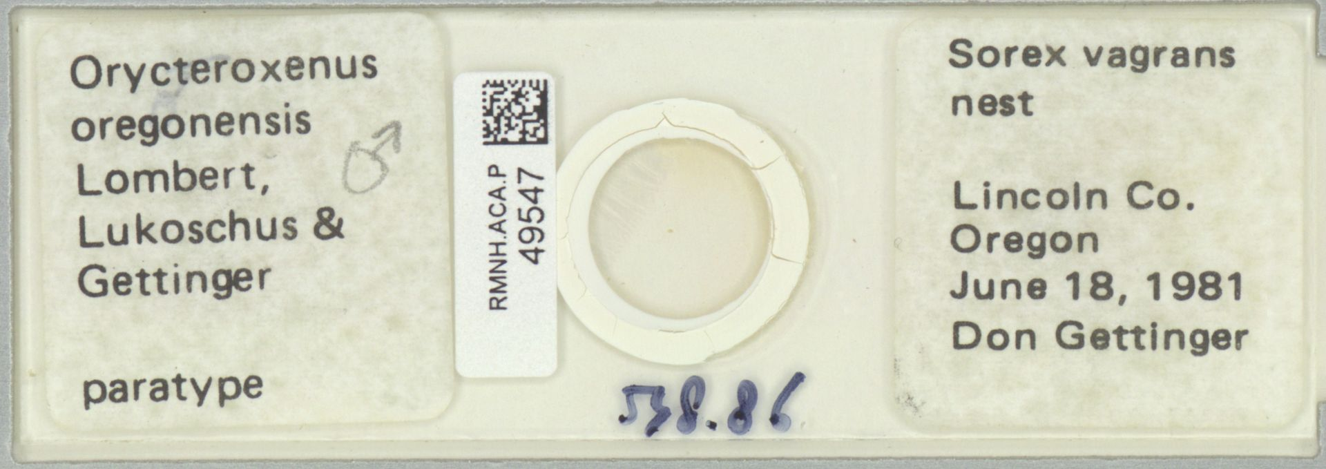 RMNH.ACA.P.49547 | Orycteroxenus oregonensis Lombert, Lukoschus & Gettinger