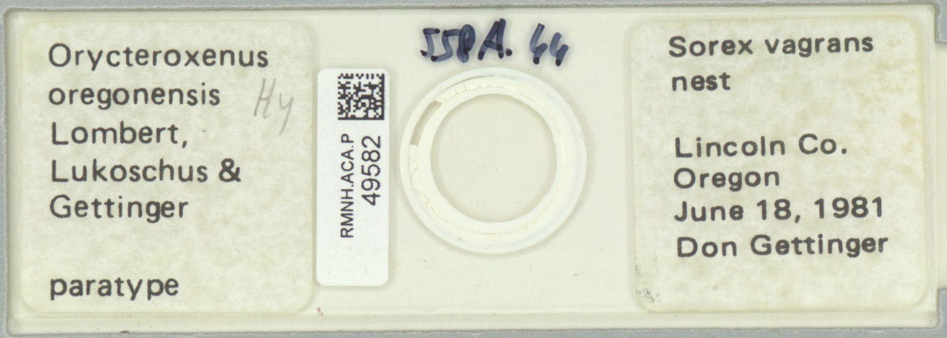RMNH.ACA.P.49582 | Orycteroxenus oregonensis Lombert, Lukoschus & Gettinger