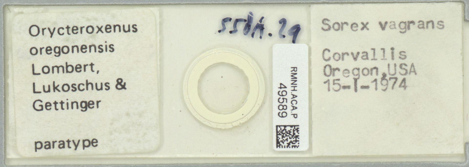 RMNH.ACA.P.49589 | Orycteroxenus oregonensis Lombert, Lukoschus & Gettinger