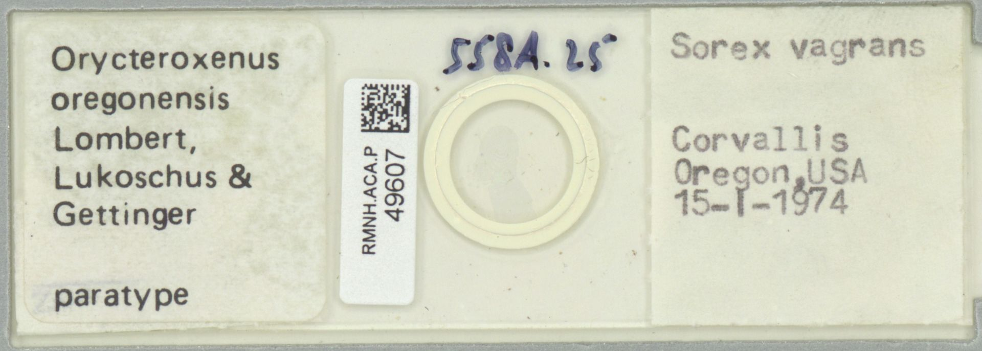 RMNH.ACA.P.49607 | Orycteroxenus oregonensis Lombert, Lukoschus & Gettinger