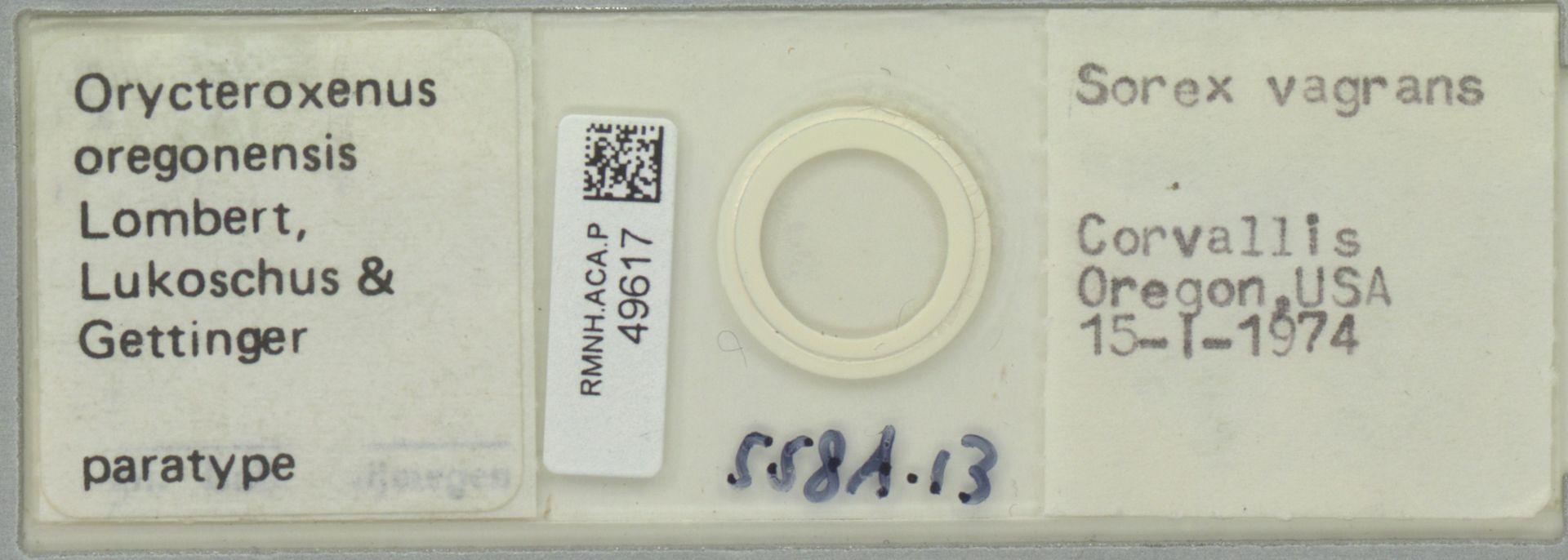 RMNH.ACA.P.49617 | Orycteroxenus oregonensis Lombert, Lukoschus & Gettinger