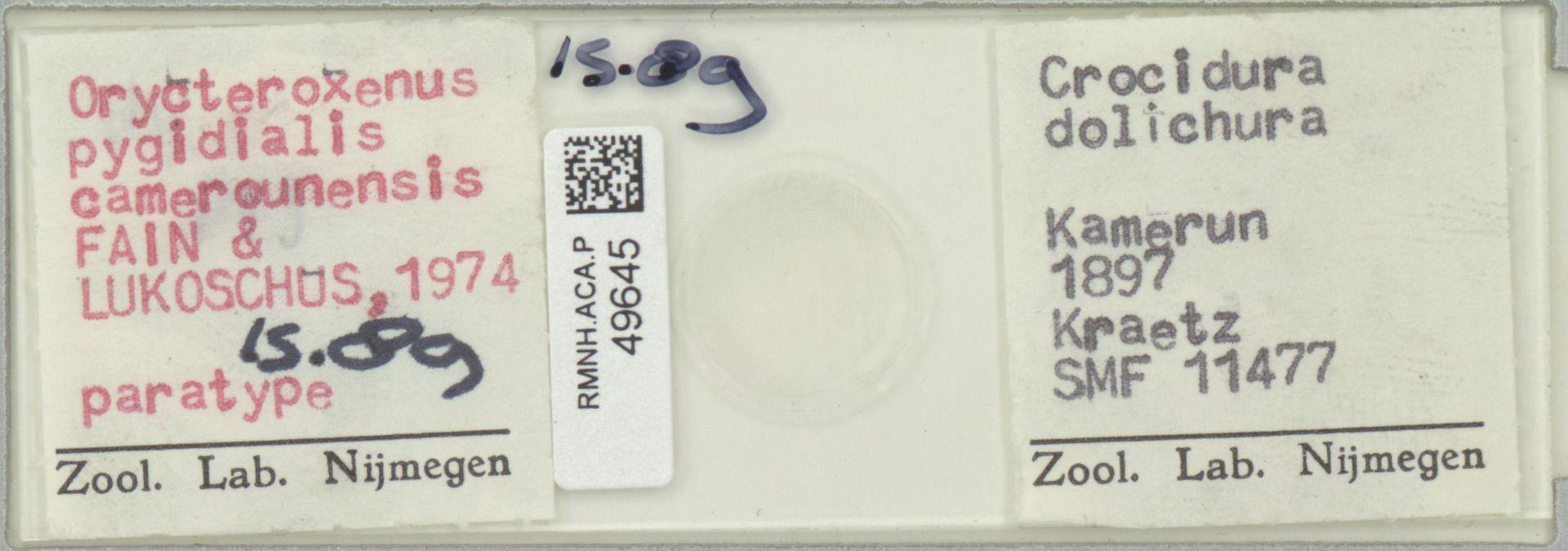 RMNH.ACA.P.49645 | Orycteroxenus pygidialis camerounensis Fain & Lukoschus, 1974
