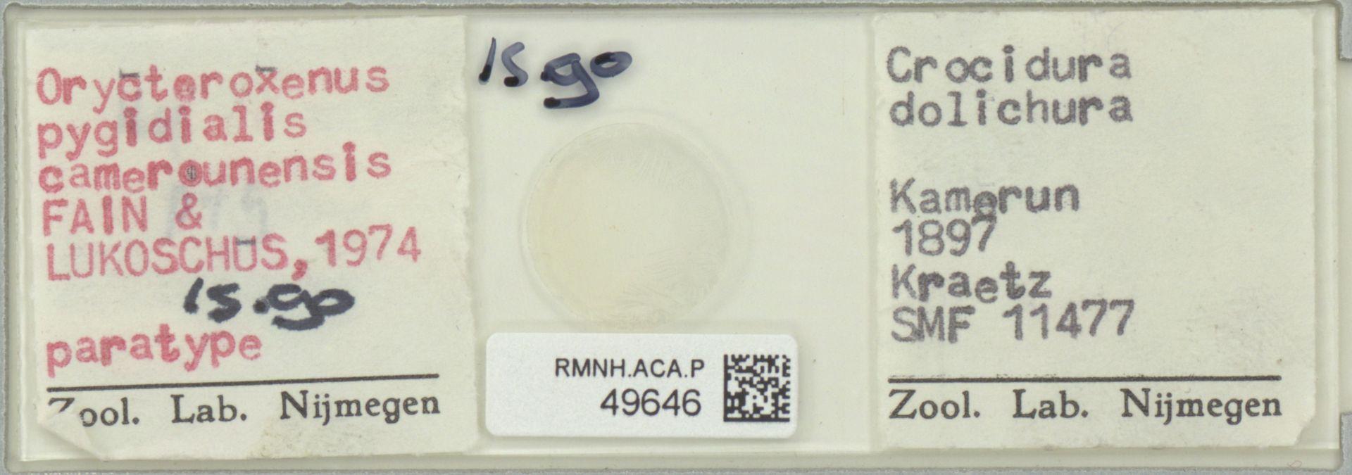 RMNH.ACA.P.49646   Orycteroxenus pygidialis camerounensis Fain & Lukoschus, 1974