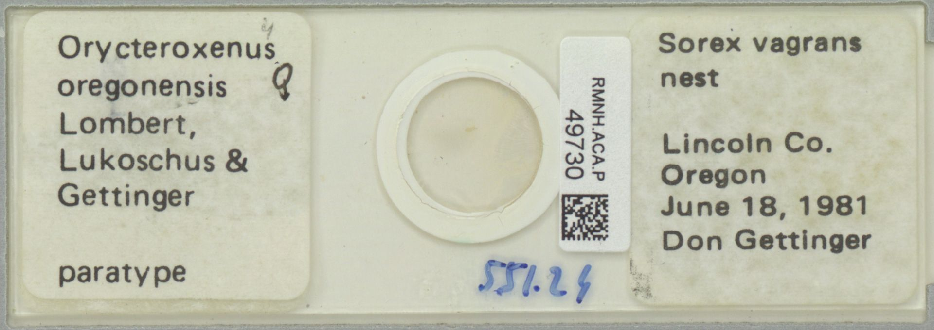 RMNH.ACA.P.49730   Orycteroxenus oregonensis Lombert, Lukoschus & Gettinger