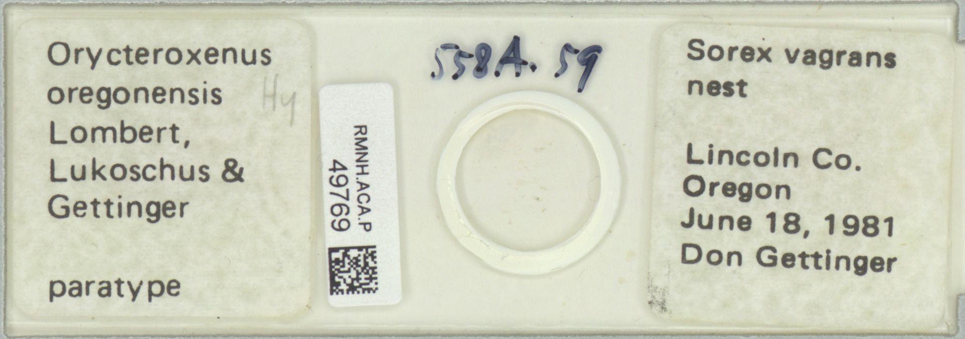 RMNH.ACA.P.49769   Orycteroxenus oregonensis Lombert, Lukoschus & Gettinger