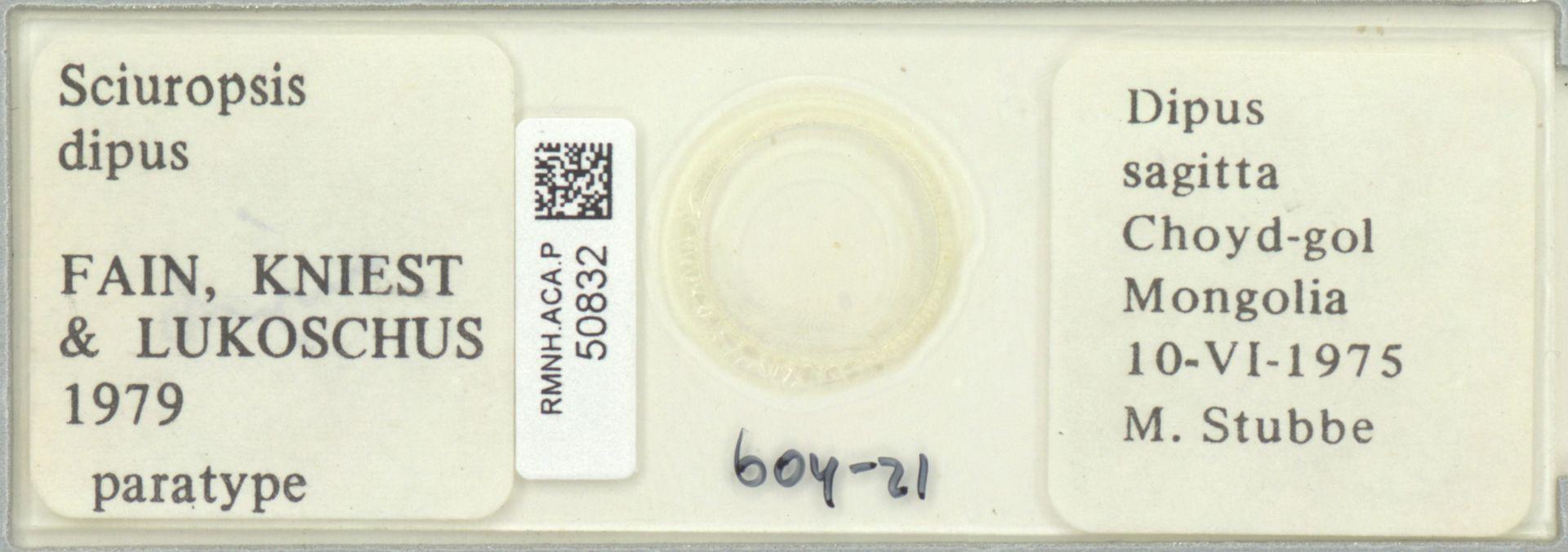 RMNH.ACA.P.50832 | Sciuropsis dipus Fain, Kniest & Lukoschus 1979
