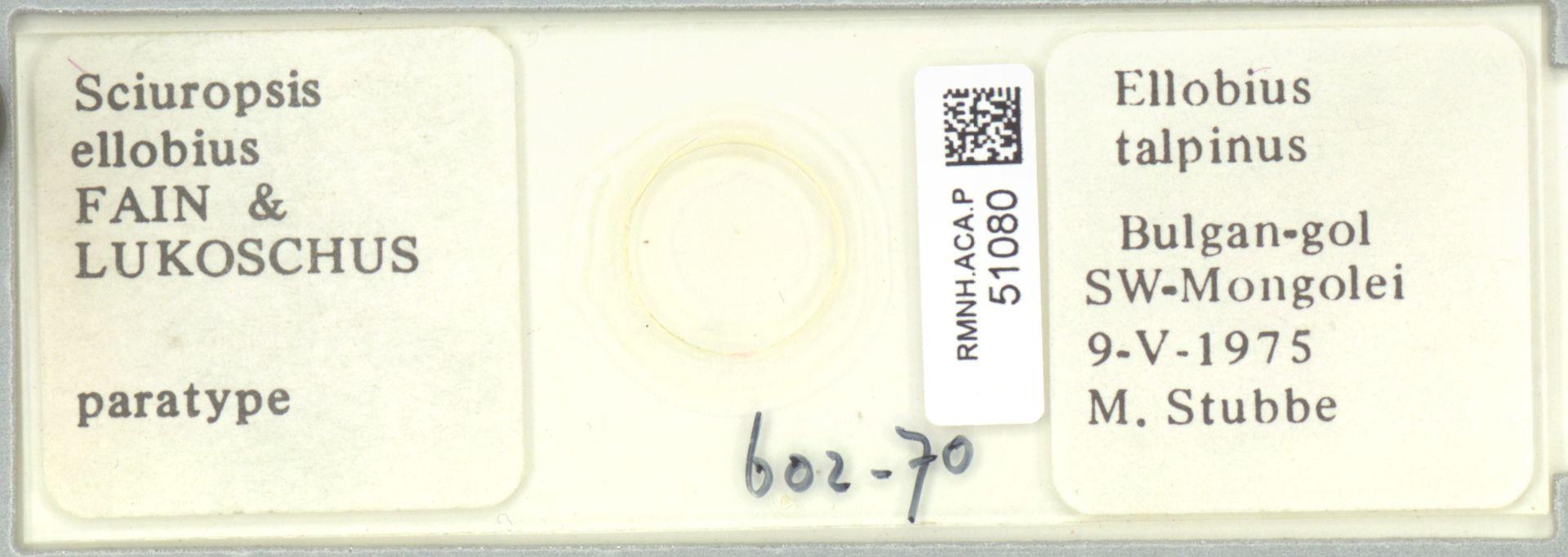 RMNH.ACA.P.51080   Sciuropsis ellobius Fain & Lukoschus
