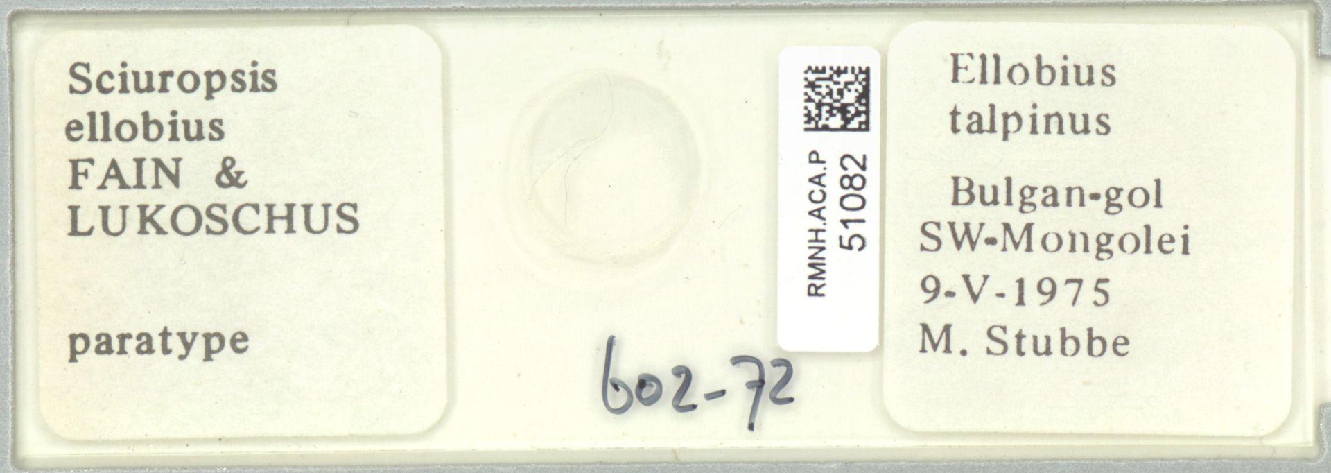 RMNH.ACA.P.51082 | Sciuropsis ellobius Fain & Lukoschus
