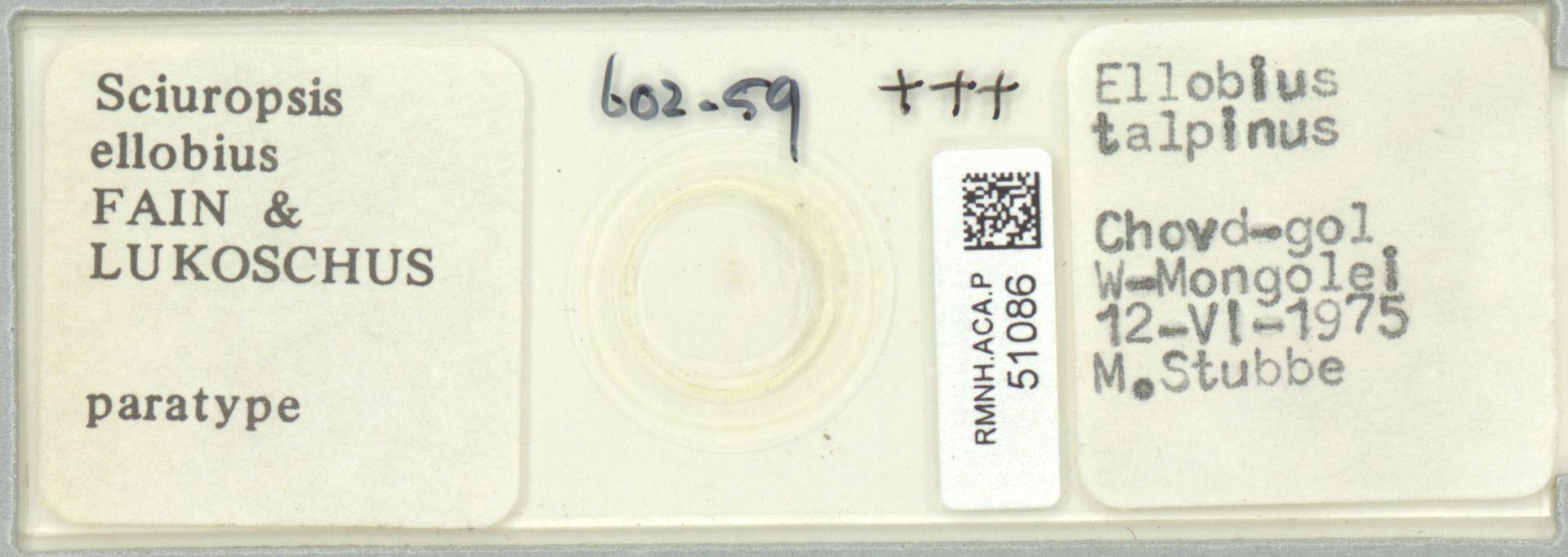 RMNH.ACA.P.51086 | Sciuropsis ellobius Fain & Lukoschus