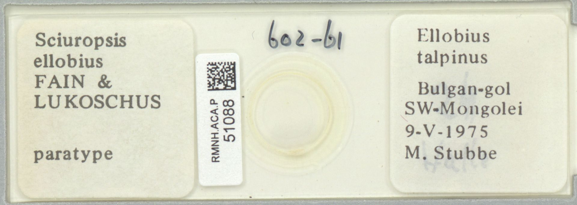 RMNH.ACA.P.51088 | Sciuropsis ellobius Fain & Lukoschus