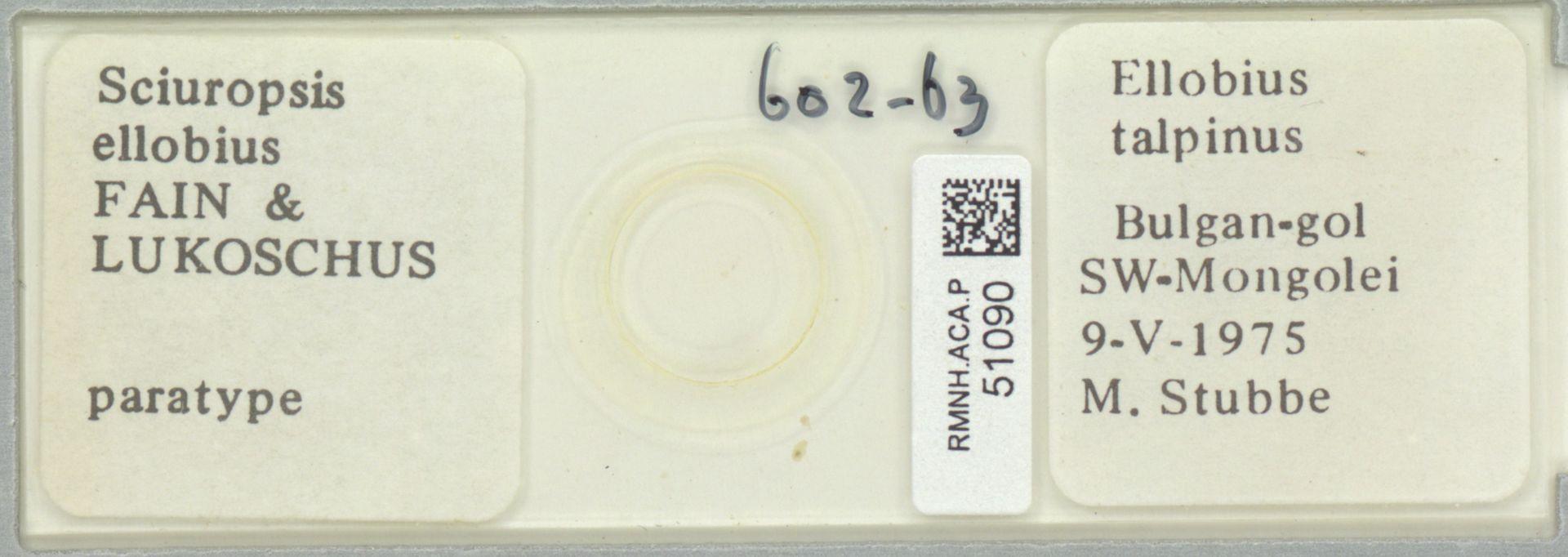 RMNH.ACA.P.51090   Sciuropsis ellobius Fain & Lukoschus