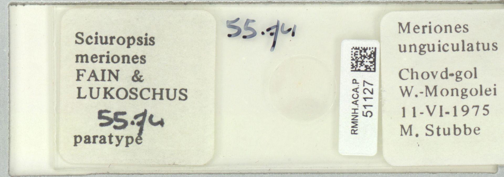 RMNH.ACA.P.51127 | Sciuropsis meriones Fain & Lukoschus