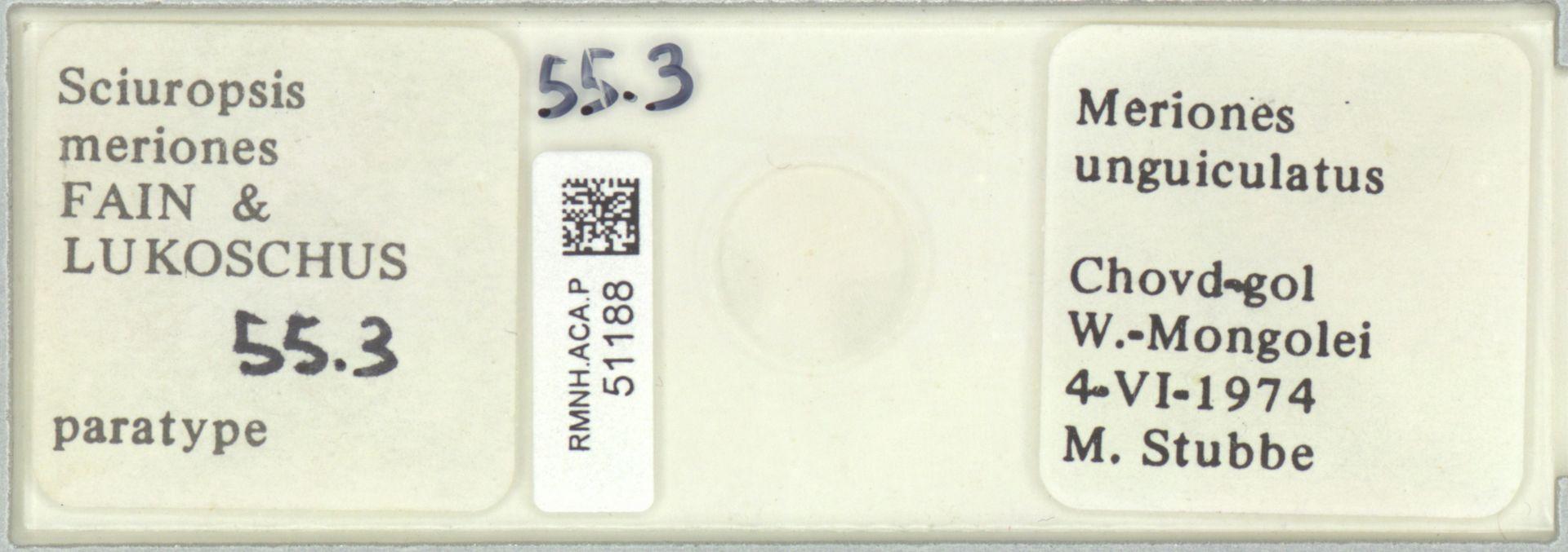 RMNH.ACA.P.51188 | Sciuropsis meriones Fain & Lukoschus
