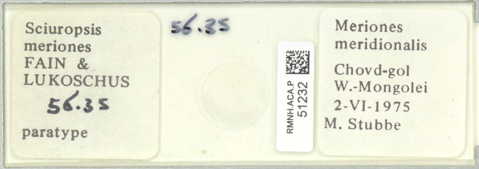 RMNH.ACA.P.51232 | Sciuropsis meriones Fain & Lukoschus