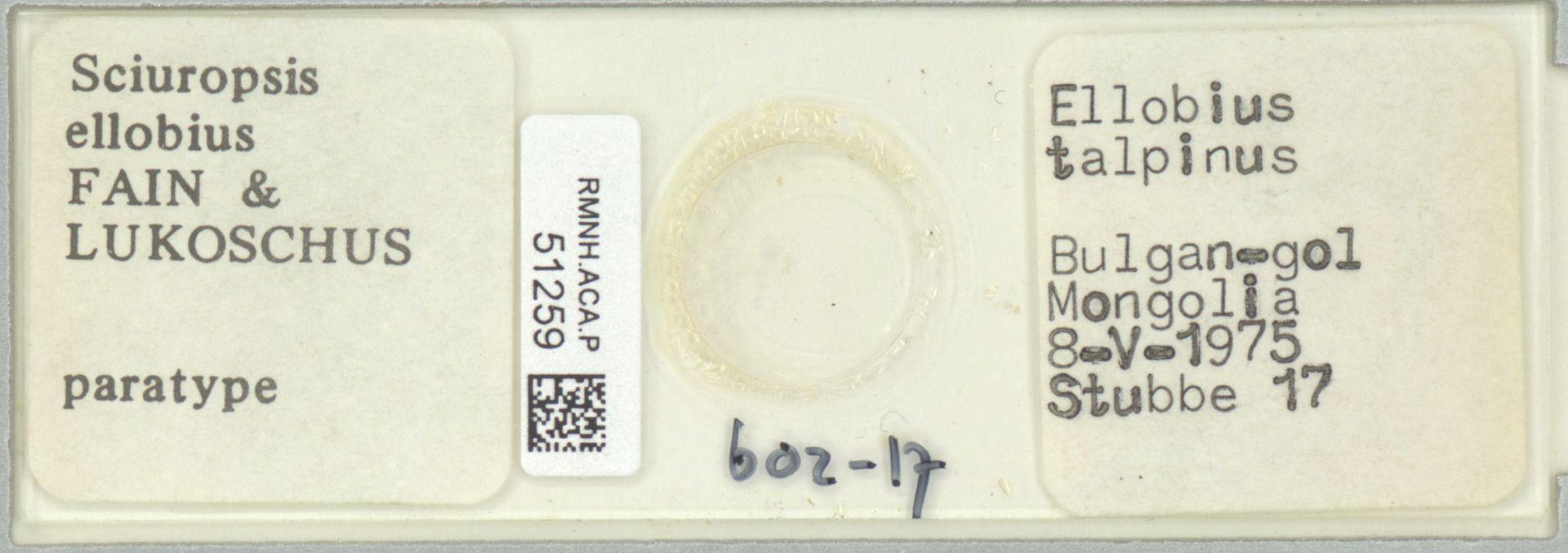 RMNH.ACA.P.51259 | Sciuropsis ellobius Fain & Lukoschus