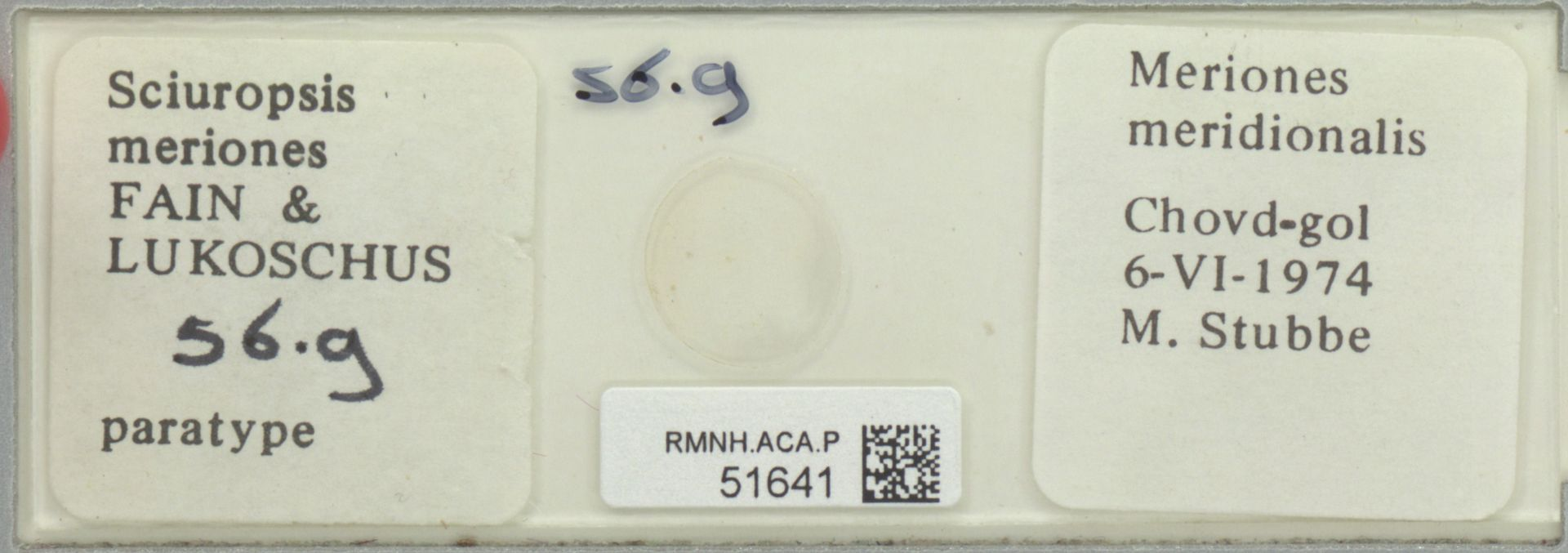 RMNH.ACA.P.51641 | Sciuropsis meriones Fain & Lukoschus