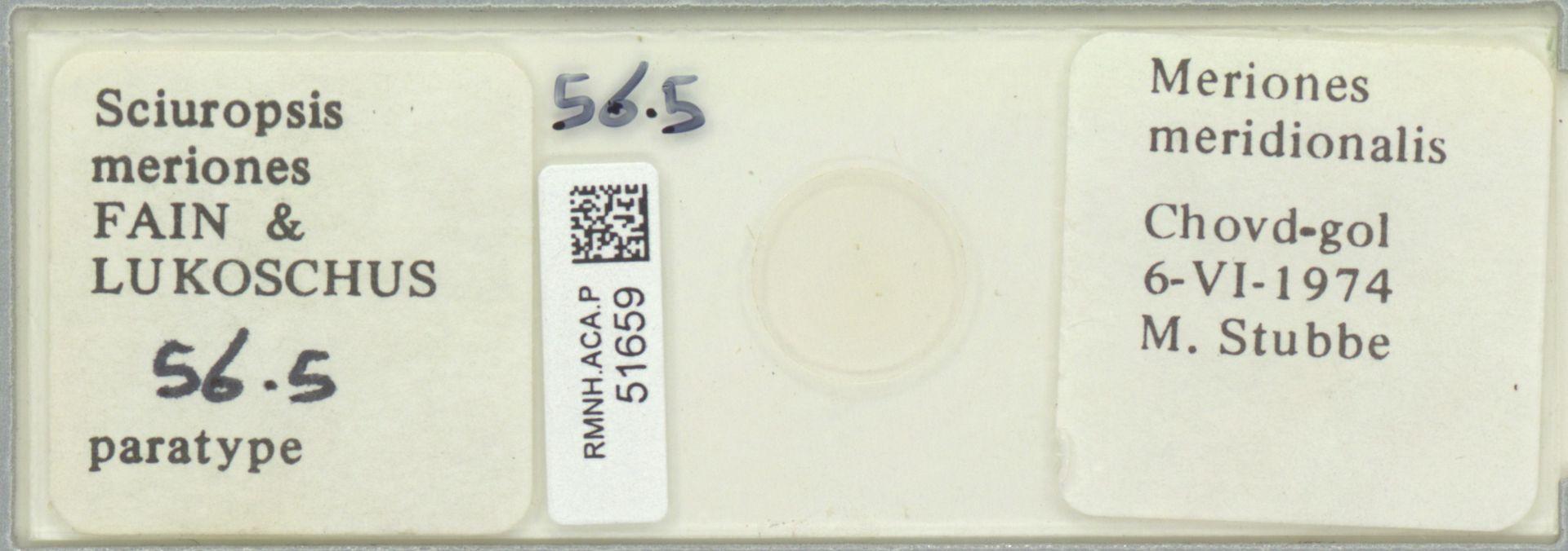 RMNH.ACA.P.51659 | Sciuropsis meriones Fain & Lukoschus