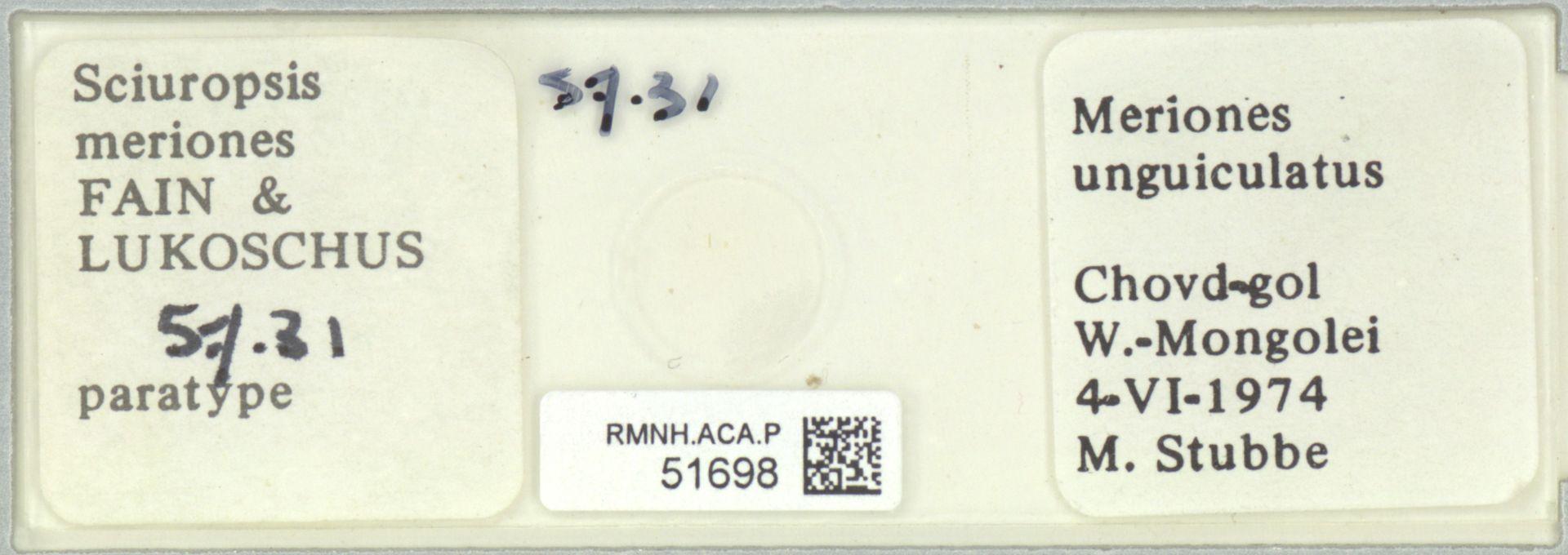 RMNH.ACA.P.51698   Sciuropsis meriones Fain & Lukoschus