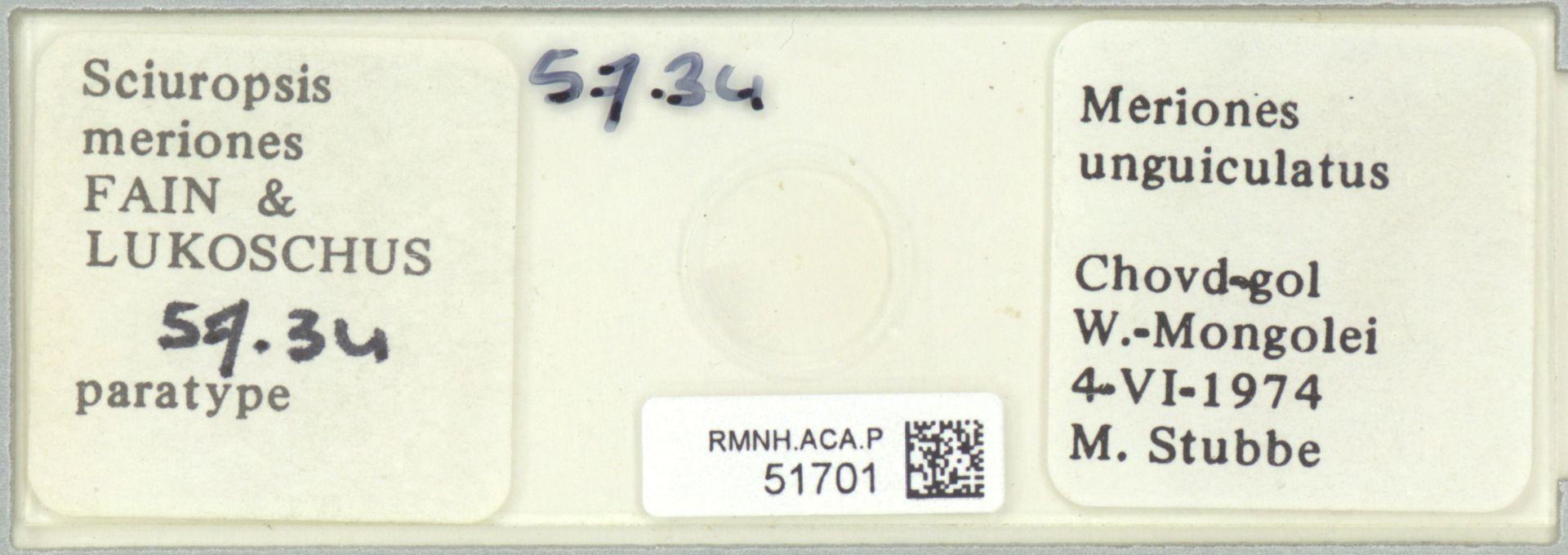 RMNH.ACA.P.51701 | Sciuropsis meriones Fain & Lukoschus